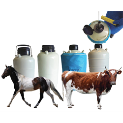 Dewar Semen Specimen Tanks for Animal Artificial Breeding Program